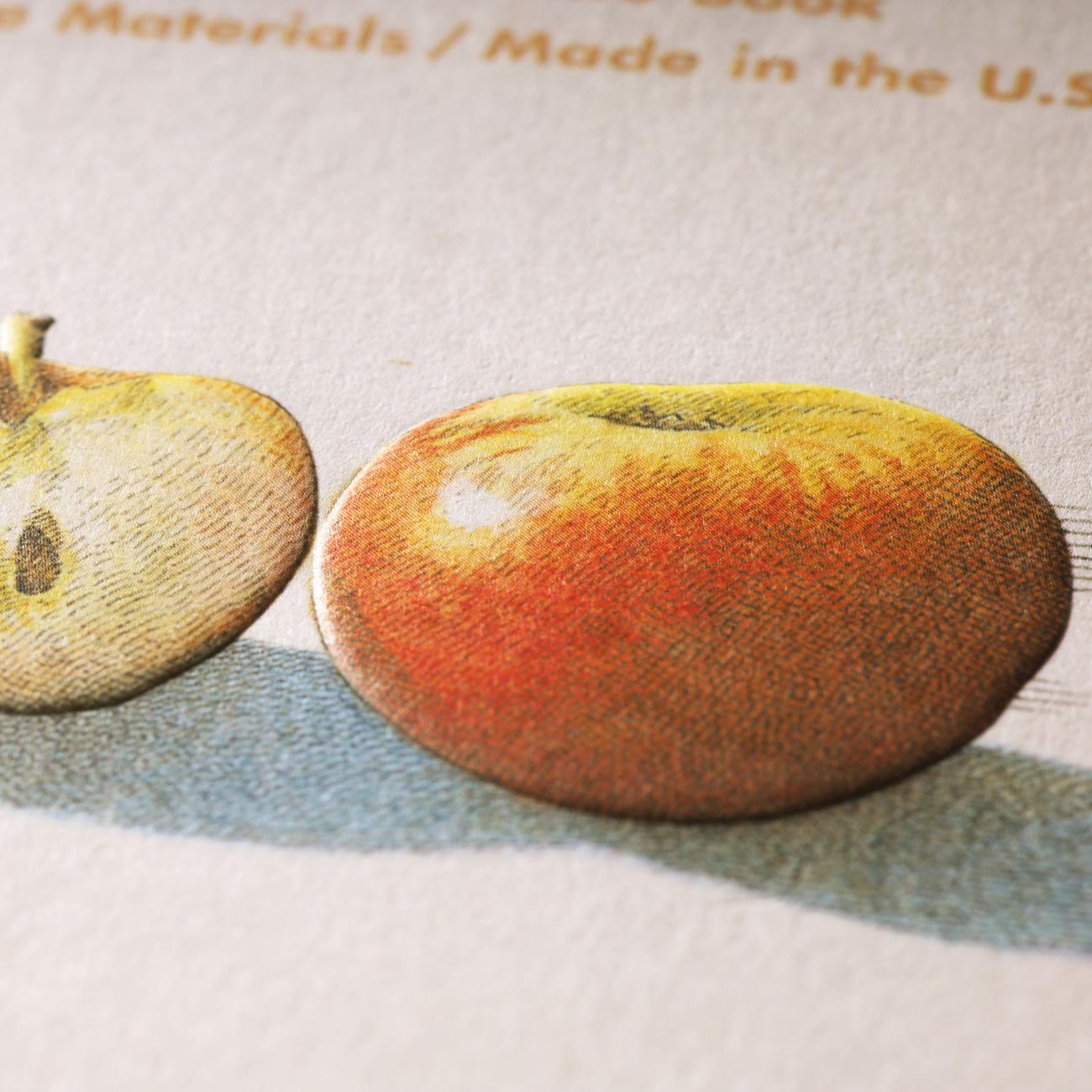Field Notes, Harvest, Detail, Illustriert